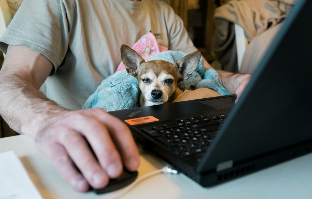 photo of man working at home with his dog on lap